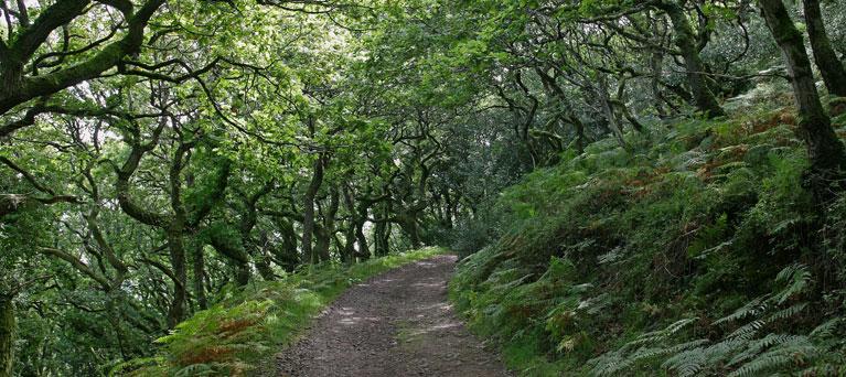 Walks around Porlock Weir and the Porlock Manor Estate